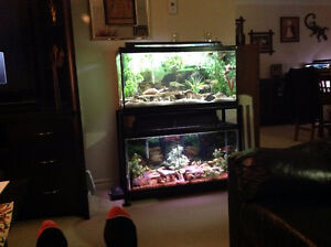 AQUARIUM - DUAL 35 GALLON LONG AQUARIUM PACKAGE