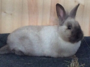 Year old rabbit, no charge