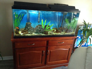 Fish tank, stand and everything in the picture