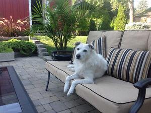 Pet Sitting required Cambridge Kitchener Area image 1