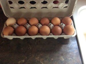 Fresh Eggs From Free Ranging Hens