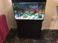 Fish tank (everything in photo included)