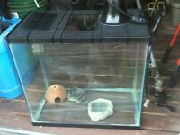 Terrarium for sale
