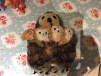 The Puppet Company mother owl and baby owl puppets