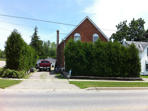 White Cedars for a Hedge and Privacy Cambridge Kitchener Area image 1