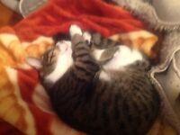 Un chat mal de 8 mois à donner