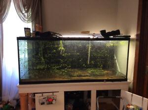 230 gallon aquarium