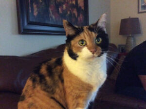 Sadly looking to rehome my elderly cat.