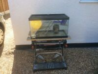 Hamster gerbil small animal tank