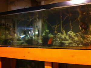 125 gallon fish tank with absolutely everything!