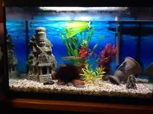 Fish tank with decorations and fish
