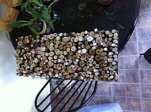 Wood Slice wall art/backdrop