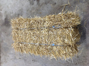 straw wheat straw small square bales of straw frost protection