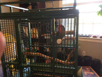 Peach faced love bird with parrot cage