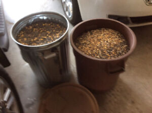 BIRD SEED in 2 Garbage Cans With Lids