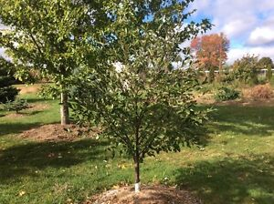 Trees, plants and shrubs available for CHEAP