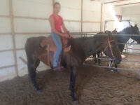 Hermannsranching.com Gentle Wetern riding horses for Sale