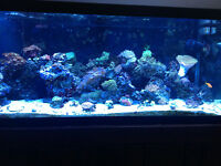 Saltwater fish tank, corals, fish and accessories