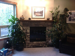 Looking for a mature female roommate to share CreekSide condo