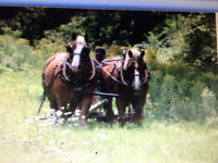 Central Ontario Draft Horse Workshop