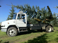 Tree Moving, Trees for Sale