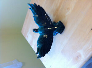 Blue Mountain Pottery Eagle