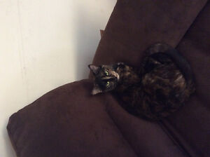 Female cat and 2 males to give away