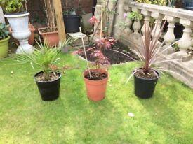 Plant trio