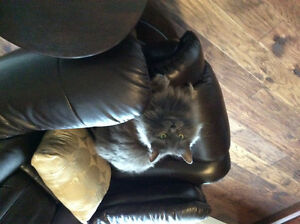 Looking to rehome cat