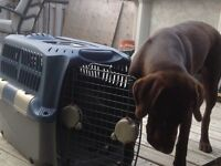 Medium sized dog crate excellent condition