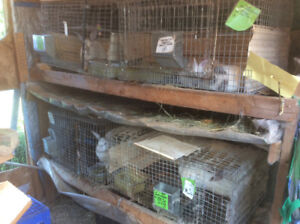 Rabbit cages and shelf