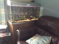 Large fish tank full set up