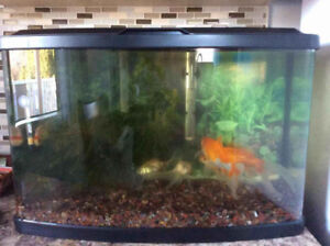 Fish tank and fish for sale