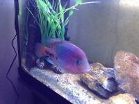 **Great large tropical fish **