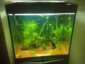 Fish tank and filter