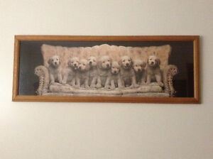 Dog / puppies picture