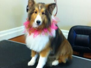 """Dog Grooming School Academy at Elite Dog Grooming Academy"