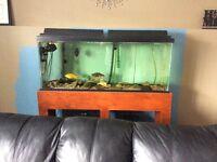 55 Gallon Aquarium, Stand, and Accessories