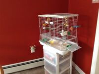Bird cage with all accessories