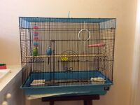 Two Loving Birds Looking For A Good Home