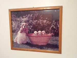 """17.5"""" x 21.25"""" Picture Frame of Cockerspaniels"""