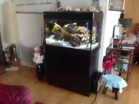 Marine fish tank Red Sea Max C- Series 250litre immaculate.