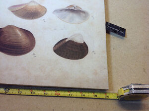 """2 NEW with tags shell prints on canvas - 13.5"""" x 20"""" Cambridge Kitchener Area image 3"""