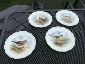 Woodland bird collection