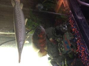 Unwanted  Fish Belleville Belleville Area image 10