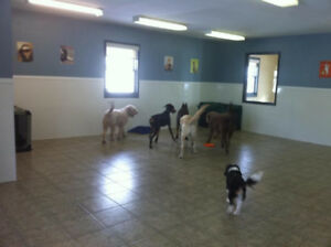 Dog Daycare Business For Sale