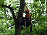 tree cuts by steve the climber