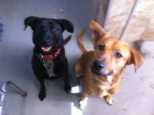 Foster Home Required for 2 Medium Dogs