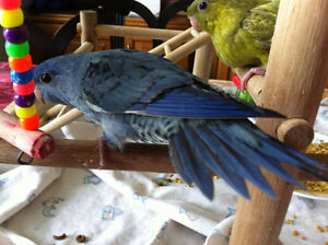 Gorgeous Hand  Raised Baby Linnies
