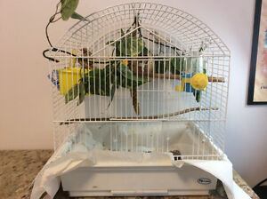A Pair of Zebra Finches plus Cage